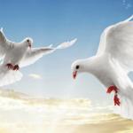 Духовная сокровищница Святой Горы: о важности подвига миротворцев