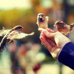 Каждый из нас может умножать добро на земле